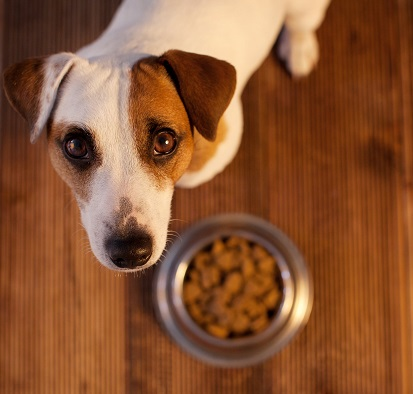 Changing Your Pets Diet