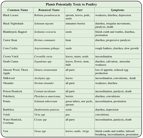 Poisons and Toxins for Chickens