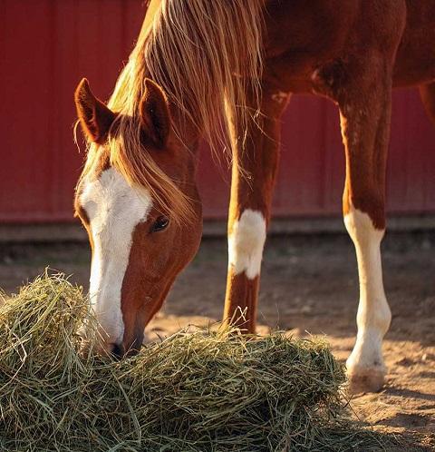 Feeding Your Horse